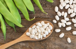 Uncooked dried white haricot beans in wooden spoon with fresh raw green beans pod plant on rustic table. Heap of legume haricot bean background ( Phaseolus vulgaris )