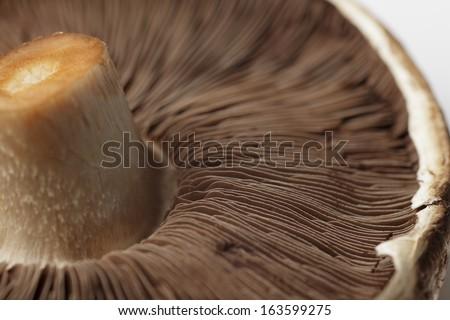 uncooked portobello mushroom, close up, horizontal