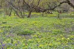 Uncultivated wild meadow with bright spring flowers and greenery