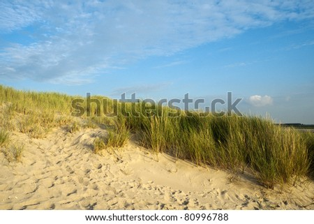 Under a blue sky dune grass grows along the coast of the Netherlands, in the beach sand footprints show where people and dogs have walked