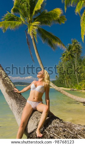 Under Palm In a Coconut Grove - stock photo
