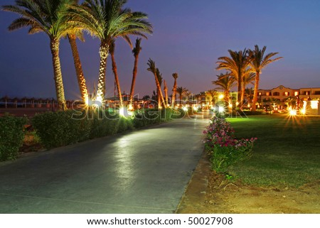 Under palm trees at night
