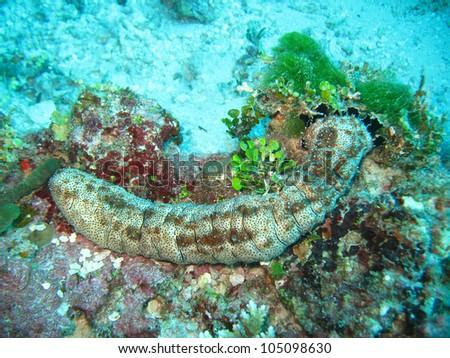 under sea coral marine life image background deep ocean