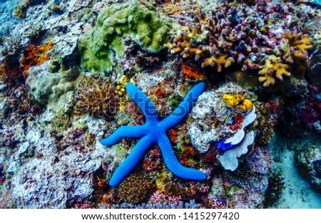 Under the deep blue sea #1415297420