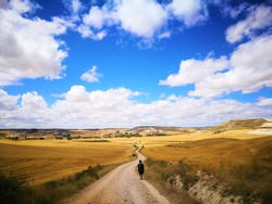 Under the horizontal skyline of Camino de Santiago, a pilgrim walks lonely between autumn golden fields.