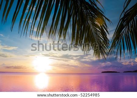 Under the palms
