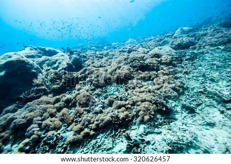 under the sea #320626457