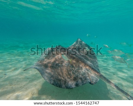 Under the Sea in the Caribbean Sea