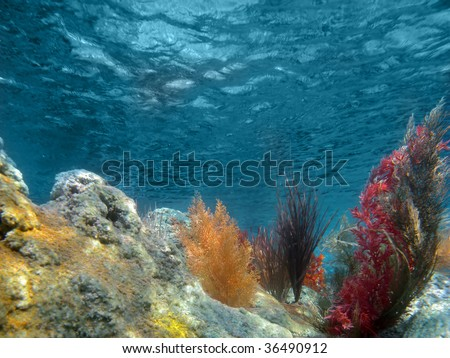Plants Under the Sea http://www.shutterstock.com/pic-36490912/stock-photo-under-the-sea-view-of-the-ocean-with-plants-and-coral.html
