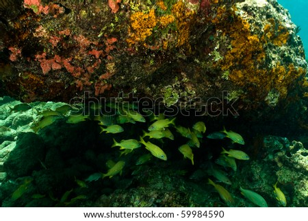 Under this coral overhand the french grunts gathered for protection.