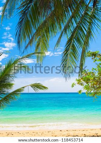 Under Trees Coconut Getaway #118453714