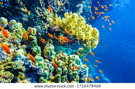 Under water coral fishes view. Underwater coral fish shoal
