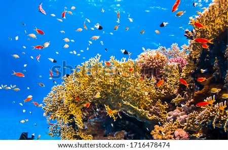 Under water coral reef fishes. Underwater world view