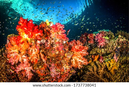 Under water coral reef view