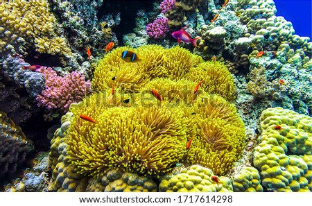 Under water coral scene view. Underwater world view