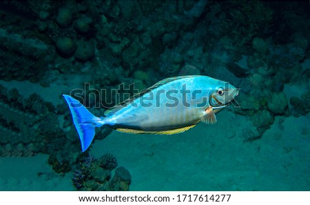 Under water fish close view