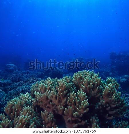 under water ocean / landscape underwater world, scene blue idyll nature #1375961759