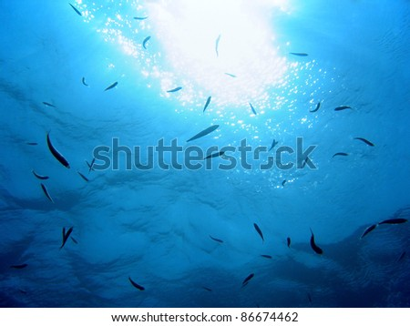 Stock Photo Under Water Surface With Sun Light Reflection And A School