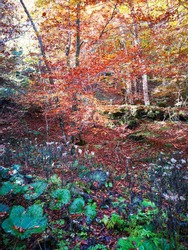 Undergrowth with the colors of autumn, like an impressionist painting