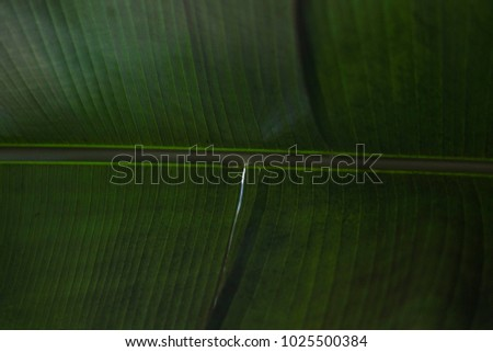 Underneath palm frond green jungle forest tropical leaf background texture wallpaper spine close up macro