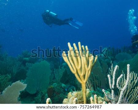 undersea Cuba, aqualunger and bright corals #757264987