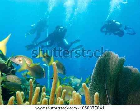 undersea Cuba, aqualungers, fishes and corrals #1058377841