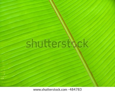 Underside of a large leaf