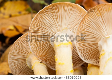 Underside of Wild Fungi #88090228