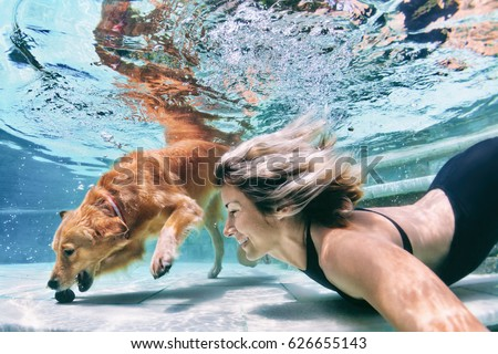 Underwater action. Smiley woman play with fun, training golden retriever puppy in swimming pool - jump and dive. Active water games with family pet, popular dog breed like companion on summer vacation #626655143