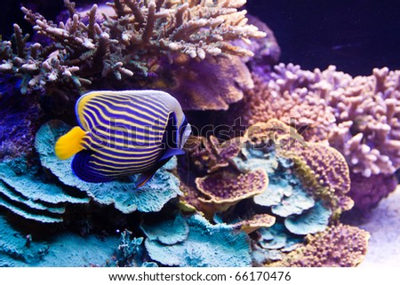 Underwater background - fishes and coral.