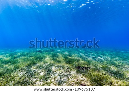 Underwater background of sunbeams cutting down through blue water and illuminating the shallow water seagrass below.
