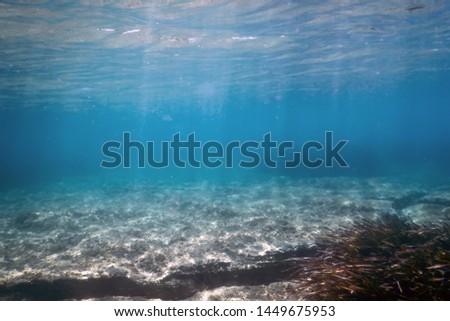 Underwater background with seaweed, underwater scene