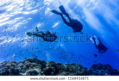 Underwater big fish race with divers scene. Big fish chasing divers underwater #1168416871