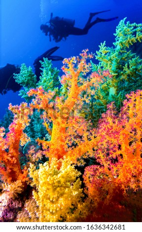 Underwater colorful coral diving scene. Colorful underwater coral reef. Underwater coral reef view