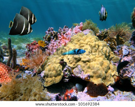 Underwater colorful sea life with Mustard Hill coral and tropical fish in a seabed of the Caribbean sea, Costa Rica