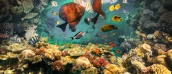 Underwater colorful tropical fishes at coral reef at Red Sea - bluecheek butterflyfish, Pale damsel, sergiant, desjardin sailfin tangfish or Zebrasoma desjardinii