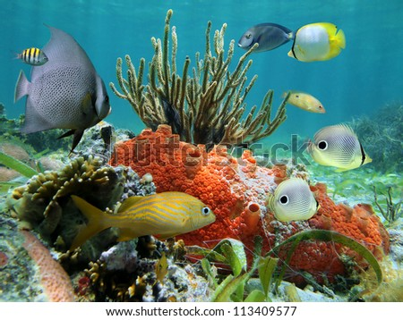 Underwater colors of marine life in a coral reef, Caribbean sea