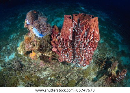 Underwater coral and fish