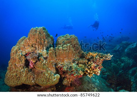 Underwater coral and fish and diver