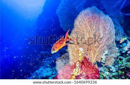 Underwater coral fish scene. Underwater world view. Coral fish underwater. Underwater life