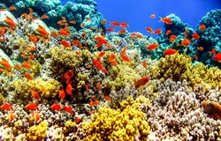 Underwater coral fish shoal view