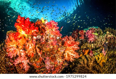Underwater coral fish shoal view. Beautiful underwater coral. Coral fishes underwater. Underwater coral view