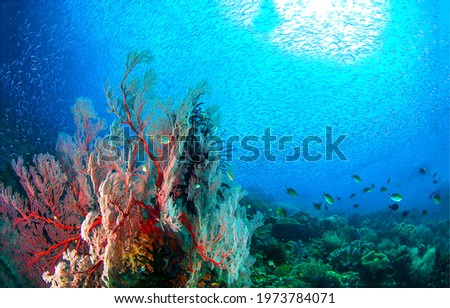 Underwater coral fish shoal view. Fish shoal underwater scene. Underwater fish shoal. Coral fishes in underwater world