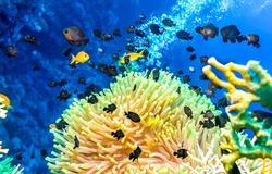 Underwater coral fish shoal view. Underwater coral fishes close scene. Underwater world