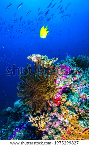 Underwater coral fish vertical scene. Yellow coral fish in underwater scene. Beautiful underwater coral. Coral fish underwater