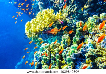 Underwater coral fishes landscape