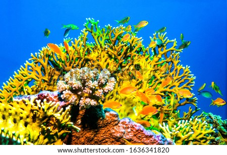 Underwater coral fishes view. Underwater world