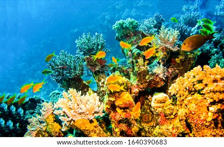 Underwater coral fishes view. Underwater world scene. Underwater life
