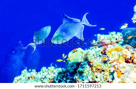 Underwater coral fishes view. Underwater world scene. Underwater life view
