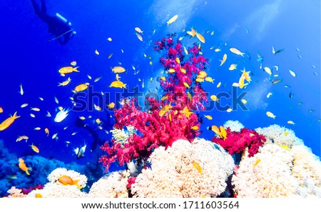 Underwater coral fishes view. Underwater world view